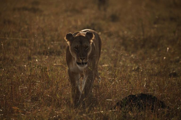 Image courtesy of Sarath Champati (sarathchampati.com).