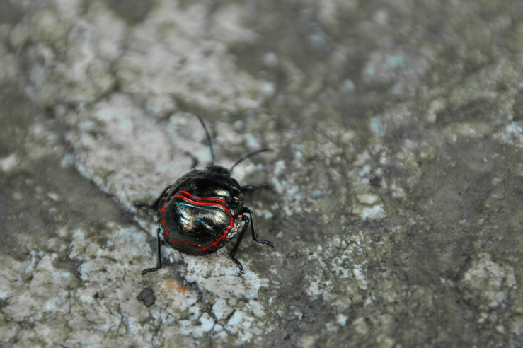 Beetle_Processed