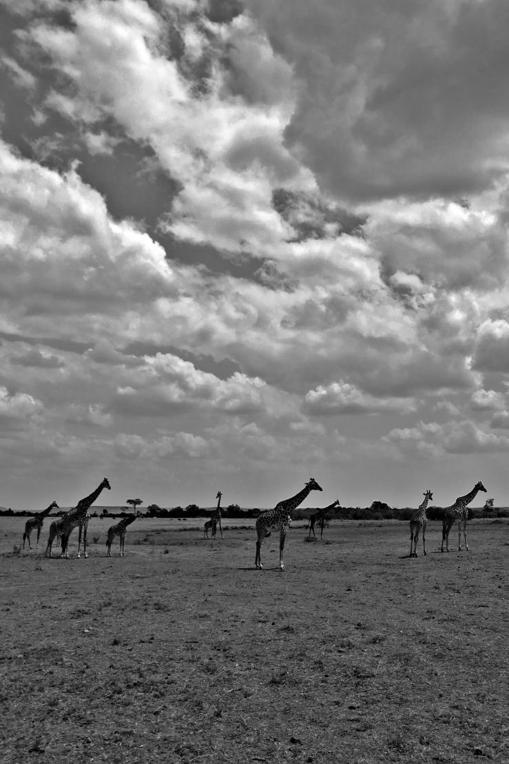 GiraffesLineChallenge_Processed