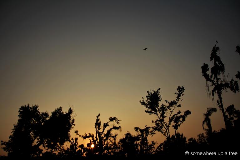 SunsetEgretVizag_ProcessedLogo