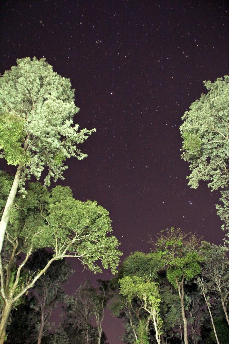 TreesStars_Processed