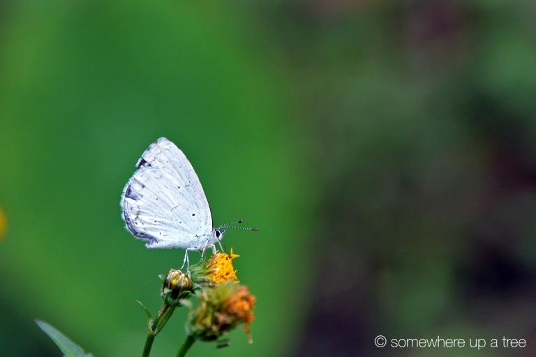 Butterfly_ProcessedLogo