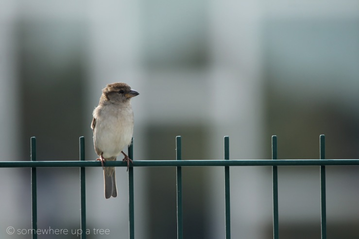 BirdPlace_ProcessedLogo