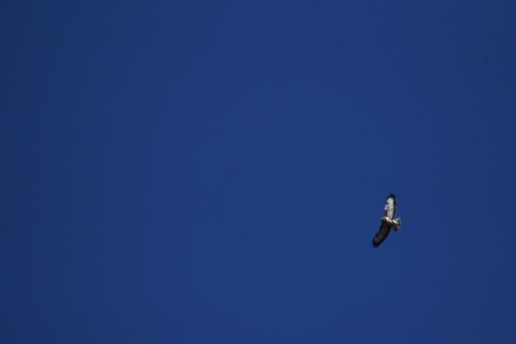 Eagle_Processed
