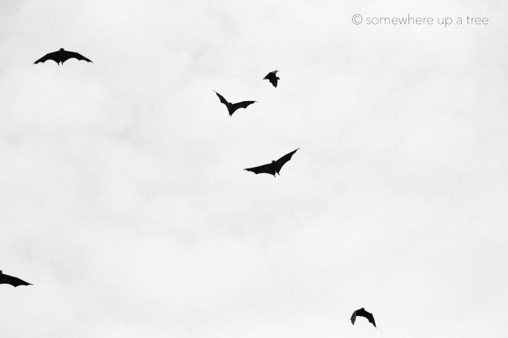 Batty_ProcessedLogo.jpg