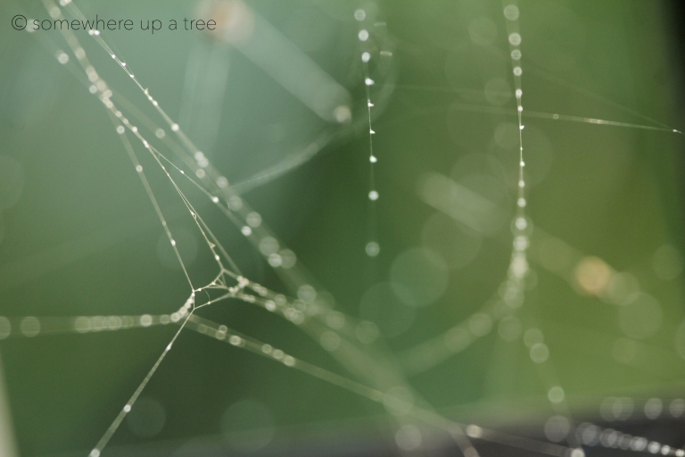 Web_ProcessedLogo.jpg