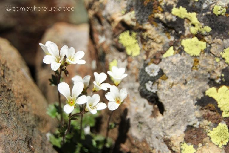 Wildflowers_ProcessedLogo.jpg
