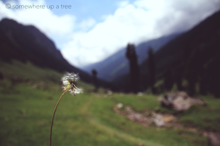 Dandelion_processedLogo.jpg