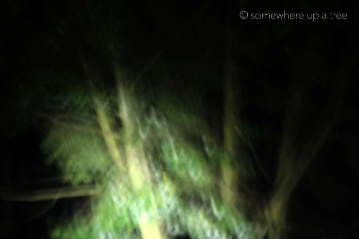 Nightroads_ProcessedLogo.jpg
