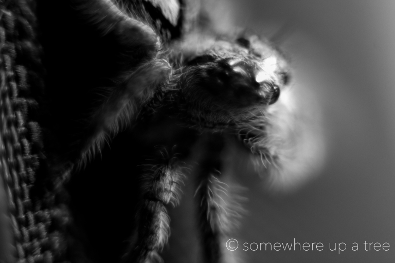 Spider_ProcessedLogo.jpg