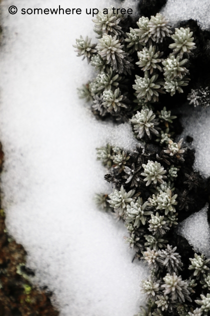 frost and plants