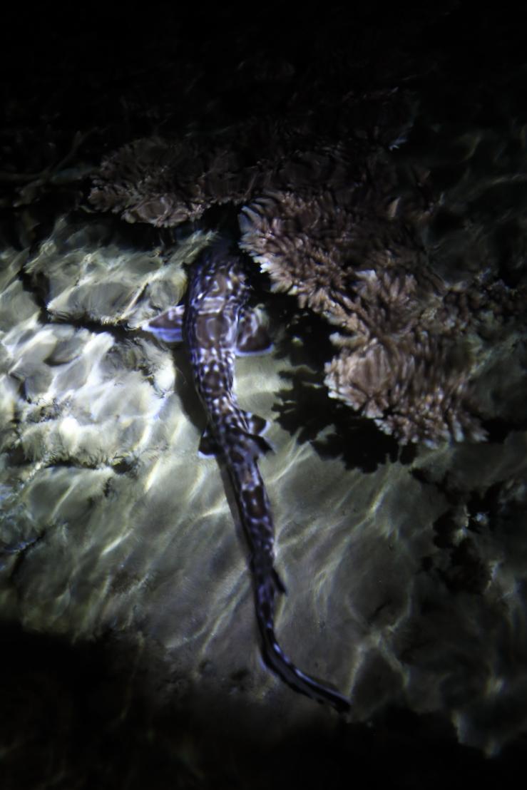 coral shark 2