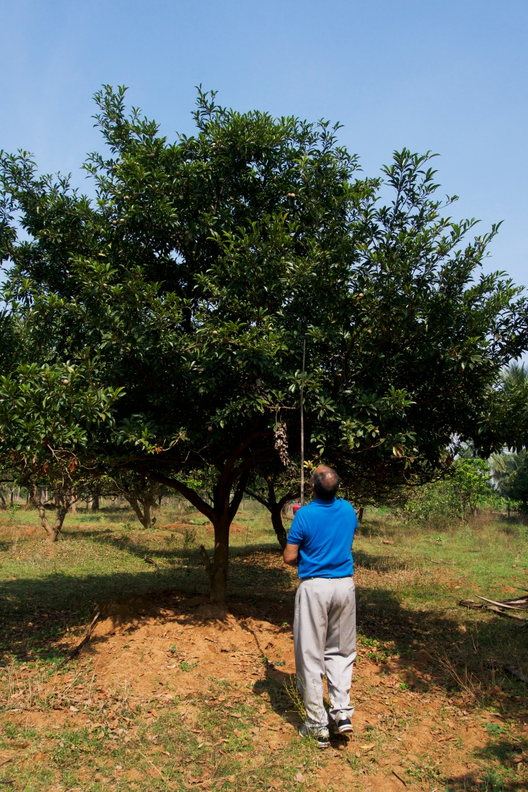 tathu tree.jpg