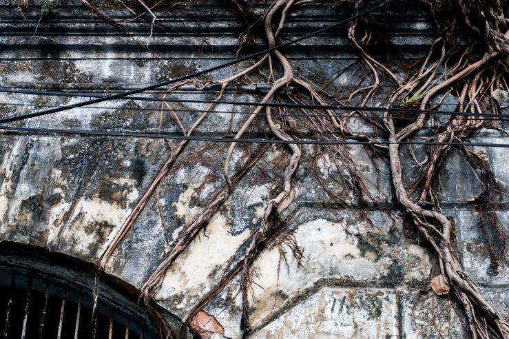 roots on door